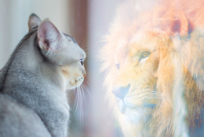 Make Your Mark trains cats to have the courage of lions